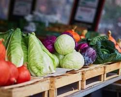 Producteur Maraîcher Eric Vachon - Auxonne - Légumes